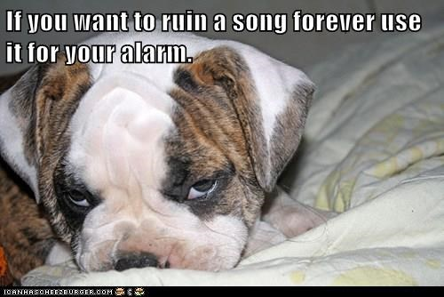 animals dogs alarm song ruin caption - 8373236480