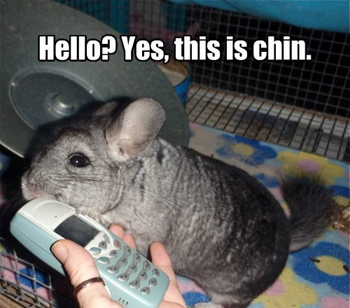 Hello? Yes, this is chin.