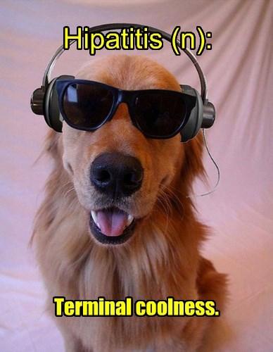 cool dogs definition golden retriever - 8373564160