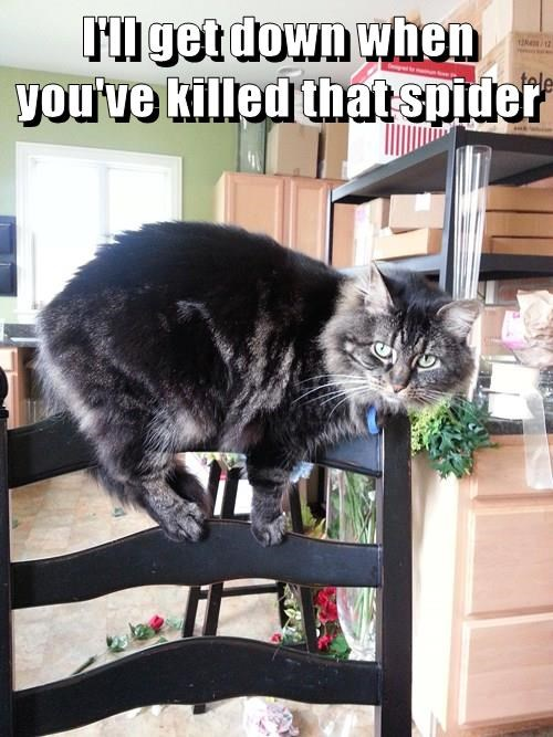 nope,spider,scared,Cats