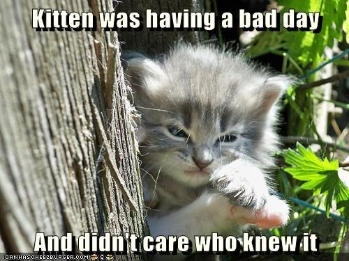 animals angry Cats monday - 8373826048