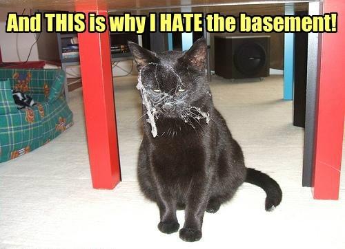 basement cat gross spiderweb Cats