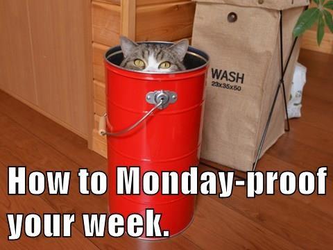 animals if i fits i sits advice Cats monday - 8374152704