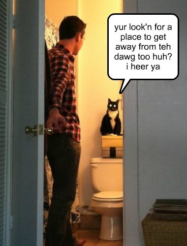 dogs bathroom cats are weird Cats hiding - 8374163712