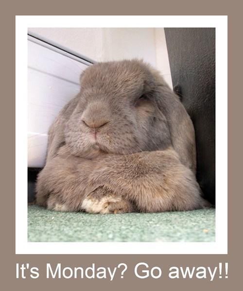 Bunday,bunny,monday