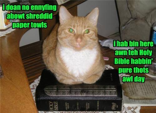 innocent paper towels Cats