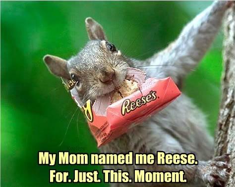 squirrel chocolate - 8374519296