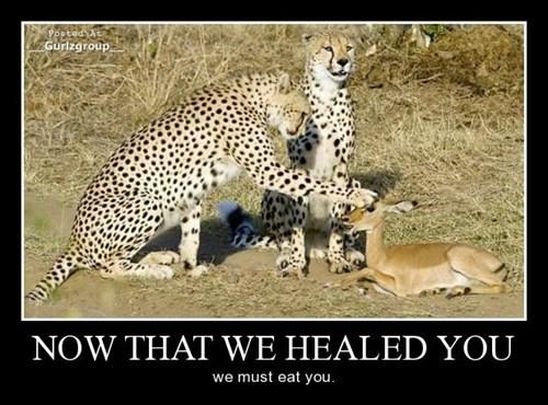 healthy cheetah food funny - 8374552064