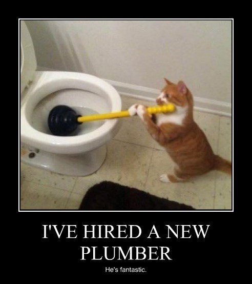 plumber professional Cats funny - 8374553856