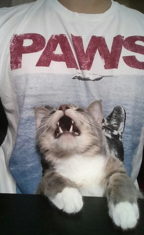 paws jaws tshirts Cats - 8374611456