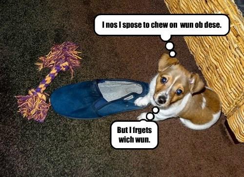 chew dogs corgi puppy - 8374682624