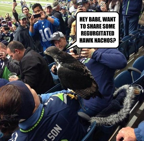 hawk,share,birds,football