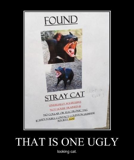 cat idiots stray funny - 8375267840