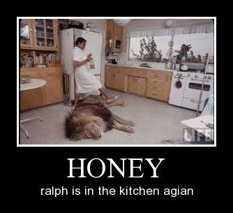 honey ralph Cats funny - 8375270144