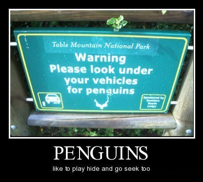 hide and seek sneaky penguin funny
