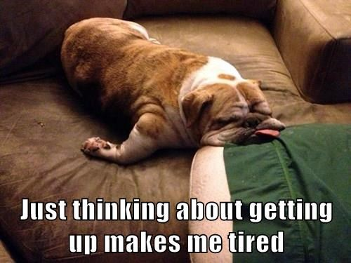 animals dogs tired thinking captions - 8375439360