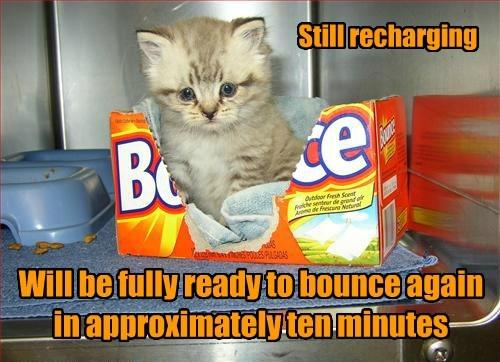 Cats kitten recharge - 8375660288