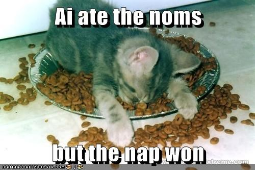 animals nap kitten noms Cats law - 8375934464