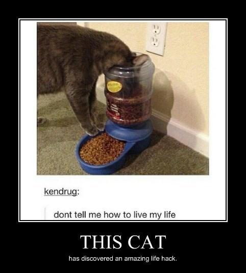 food Cats funny - 8375967744