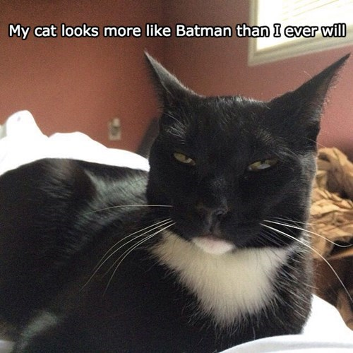 Cats,black cat,batman,superheroes,smug