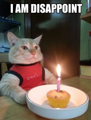 grey cat in red shirt looking straight ahead at table with cupcake and one candle