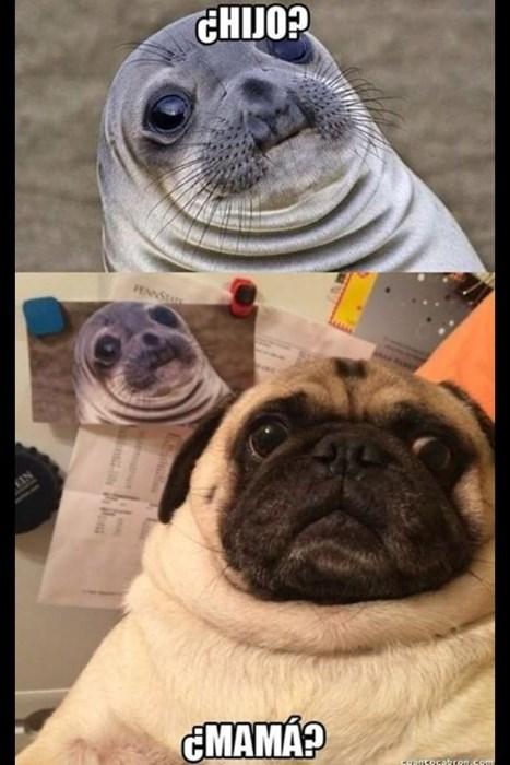 Memes animales perros bromas - 8376048128