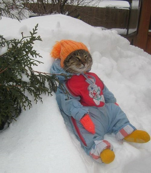 Cats,snow,poorly dressed,g rated