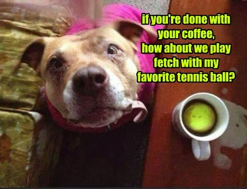 dogs,coffee,fetch,play,whoops