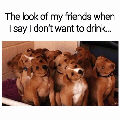 drinking dogs drunk funny fail nation - 8376259584