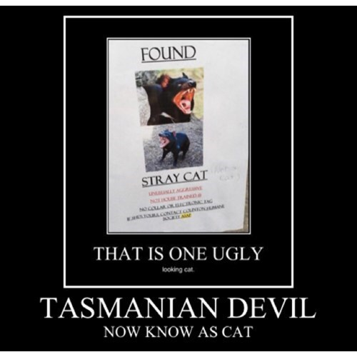 scary,Tasmanian Devil,Cats,funny