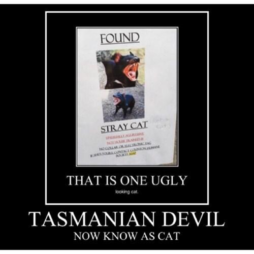 scary Cats funny - 8376388352