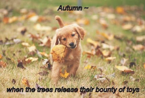 animals puppy leaves golden retriever fall - 8376796416