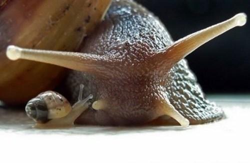 cute snail - 8376855552