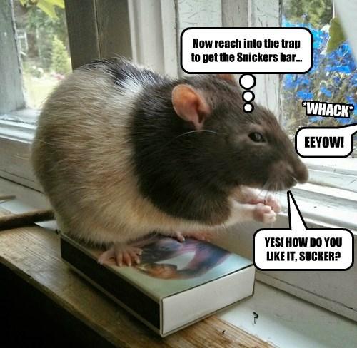 rats revenge trap human - 8376855808