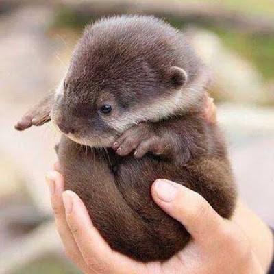 cute otter - 8376857856