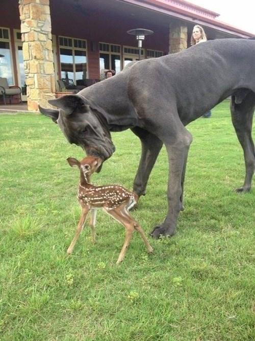 dogs cute deer - 8376869376