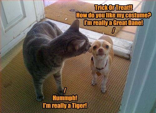 Trick Or Treat!! How do you like my costume? I'm really a Great Dane! / / Hummph! I'm really a Tiger!