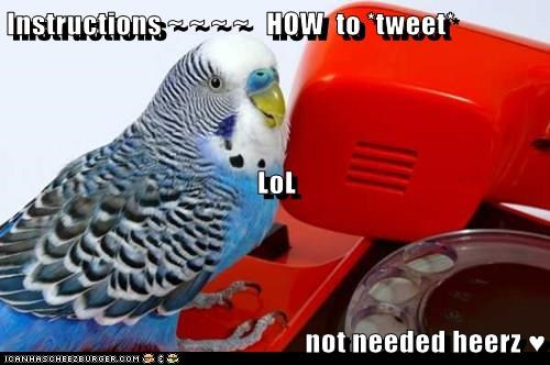 Instructions ~ ~ ~ ~ HOW to *tweet* LoL not needed heerz ♥