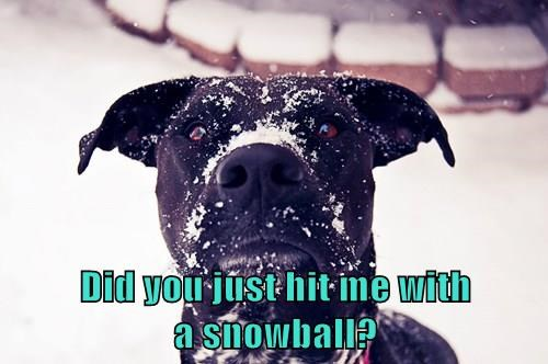 animals how dare you dogs snow Black Lab - 8376965632