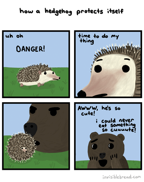 cute bear porcupine web comics - 8377004288