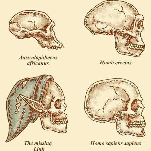 anatomy archeology science homo sapiens funny - 8377096704