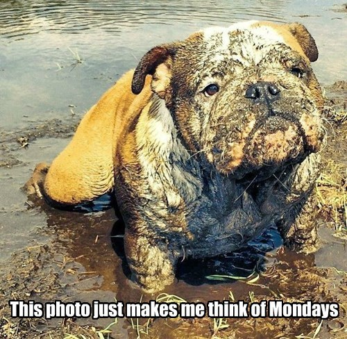 dogs,bulldog,mud,dirty,monday
