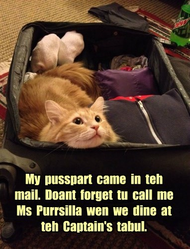 tabby passport suitcase Cats - 8377346816