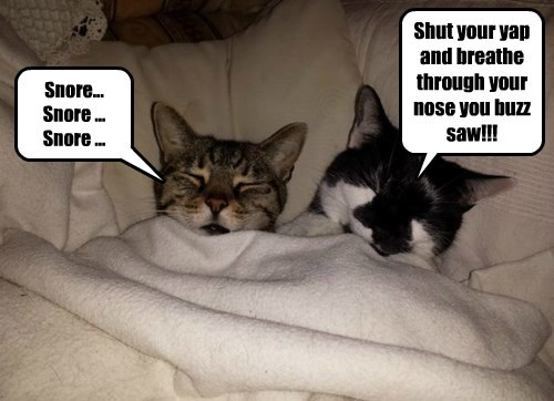 Snore Snore Snore Lolcats Lol Cat Memes Funny Cats Funny Cat Pictures With Words On Them Funny Pictures Lol Cat Memes Lol Cats