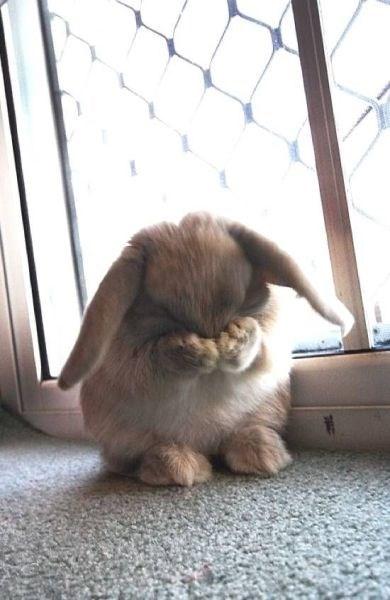 Bunday cute bunny - 8377470208