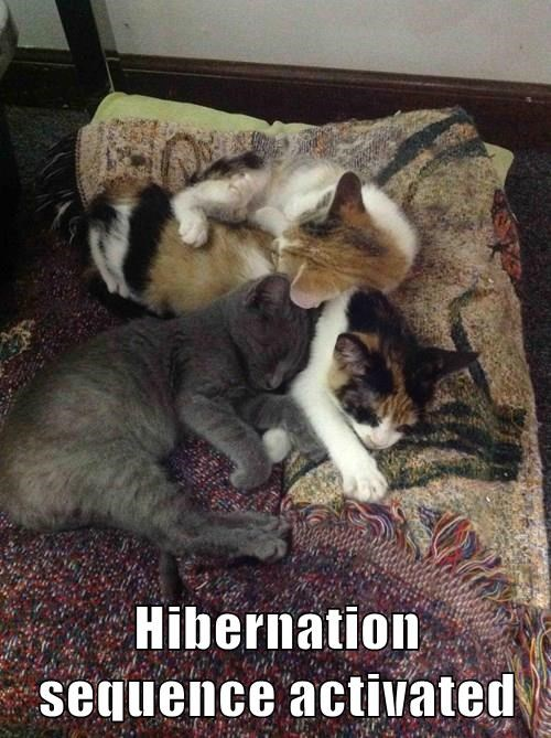 animals hibernation Cats sleeping - 8377519872