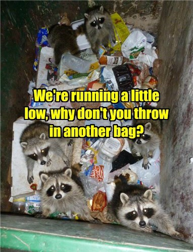 raccoon garbage please noms - 8377552896