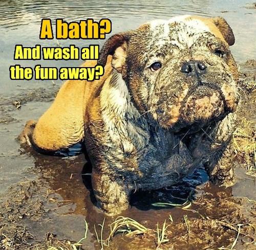 fun dogs wash caption away - 8377568000