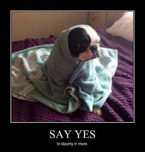 dogs cute pugs funny - 8377680640
