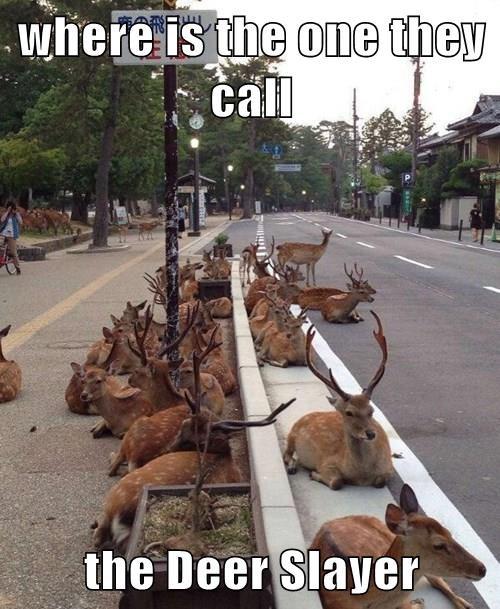animals - 8377704448